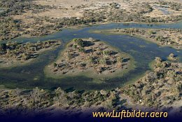 Aerial photo Giraffes in the Okavango Delta